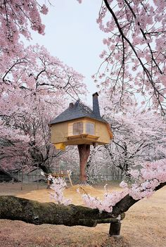 Breathtaking combination of architecture by Terunobu Fujimori (treehouse tea house), and cherry blossoms.