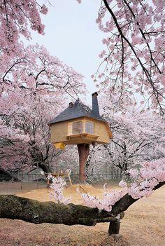 Breathtaking combination of architecture by Terunobu Fujimori (treehouse tea house), and cherry blossoms.