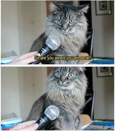 Sir, are you aware you're a cat