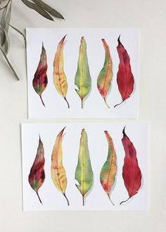 Gum leaves - horizontal A4 and 8x10 inches prints from the original botanical watercolour by Zoya Makarova
