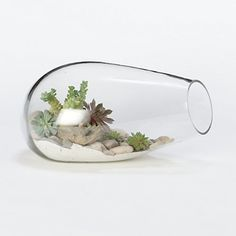 Bubbled Terrarium