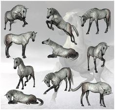 horse poses - Google Search