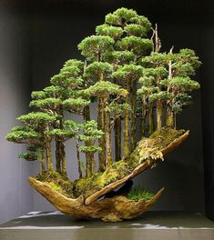 bonsai hinoki forest by masahiko kimura 1 This Bonsai Forest .- bonsai hinoki forest by masahiko kimura 1 This Bonsai Forest by Masahiko Kimura … – Modern bonsai hinoki forest by masahiko kimura 1 This Bonsai Forest by Masahiko Kimura - Garden Art, Bonsai Forest, Plants, Miniature Garden, Bonzai Tree, Zen Garden, Japanese Garden, Beautiful Tree, Hinoki