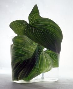 Forget the flowers!  Large  leaves in a clear vase can make a bold beautiful statement.  ~TAB