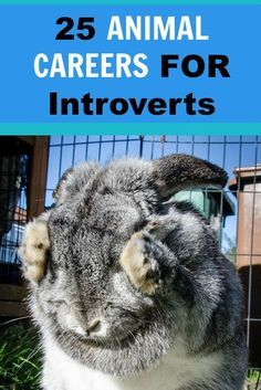 Check out these 25 Animal-Related Careers for Introverts!