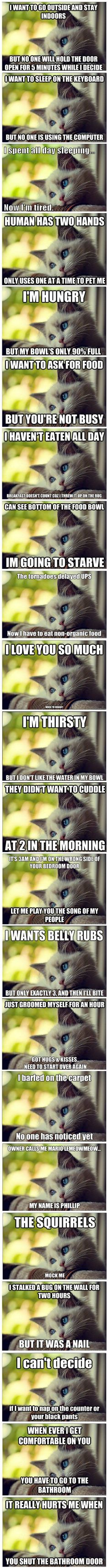 First World Cat Problems-----------you#ve probably seen this but just in case you missed it