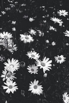Find images and videos about black, white and flowers on We Heart It - the app to get lost in what you love. Love Photography, Black And White Photography, Paz Hippie, Cute Backgrounds For Iphone, Hipster Tattoo, Flower Quotes, Beauty Art, Hd Images, Hd Wallpaper