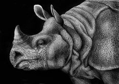 highly detailed pen and ink animal illustrations by tim jeffs (4)