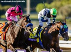 Juvenile Winner Storm The Court 'Just Chilling,' Could Target February Return - Horse Racing News   Paulick Report Breeders Cup Classic, American Pharoah, Racing News, Say What, Thoroughbred, Horseback Riding, Kentucky Derby, Horse Racing, Victorious