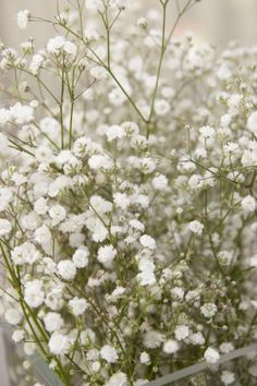 Baby's Breath - nothing else adds such a perfect touch to a bouquet or arrangement.