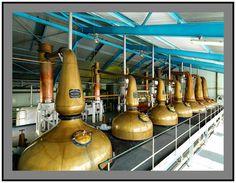 Copper stills at the Laphroaig distillery, in Islay, Scotland
