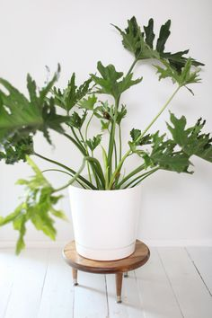 Make this little wooden plant stand to add height to your larger houseplants.  I HAVE to do this!