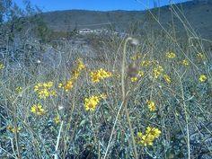 Wild flowers in Arizona - Thunderbird park in Glendale, AZ :)