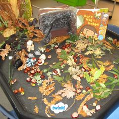 Don't Hog the Hedge teaching resources for Twinkl Originals. Autumn Eyfs Activities, Forest School Activities, Science Activities For Kids, Toddler Learning Activities, Creative Activities, Baby Room Ideas Early Years, Tuff Tray Ideas Toddlers, Autumn Theme, Autumn Fall