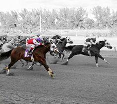 EC Jet One (Azoom Ranch) cerrando fuertemente despues de ser golpeado en la arrancada para empatar en primer lugar con la yegua Carters Sixty Six en el Derby South Florida en el Hipodromo de Hialeah Park.  #stallionmexsearch #cuartodemilla #caballo #horseracing  #ecjetone #elazabache #caballodecarreras #carrerasdecaballos #horsesofinstagram #caballosfinos #horse #quarterhorse #aqha #horselife #cavalo #horserancing  #equestrian #horsephotography #equine #instahorse #horseride #thoroughbred…