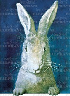 Rabbit Looking – Greeting Card (Bagged with Envelope) | Laughing Elephant...The best is yet to be. Happy Birthday.