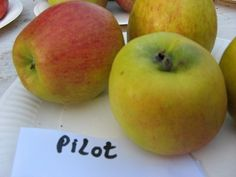 Apfel pilot