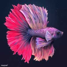 Purple and pink betta fish design resource  | premium image by rawpixel.com / Te Aggressive Animals, Fish Vector, Fish Design, Animals Of The World, Free Illustrations, Wallpaper Backgrounds, Wallpapers, Betta Fish, Tropical Fish