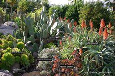 My Top Five Firewise Succulents | Succulents and Succulent Garden Design | Debra Lee Baldwin  #SerraGardens_succulents  #fireresistant_plants  #succulents_protective_barrier
