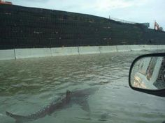 Hurricane Irene is dumping sharks in the streets of Puetro Rico!