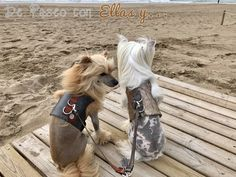 Chic fashion for pets Textiles, Chinese, Future, Chic, Dogs, Luxury, Shabby Chic, Future Tense, Classy