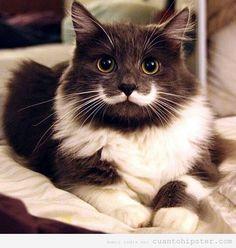 Adora-BOL! Gato con una mancha que parece un bigote hipster