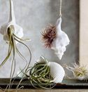Plant a shell garden