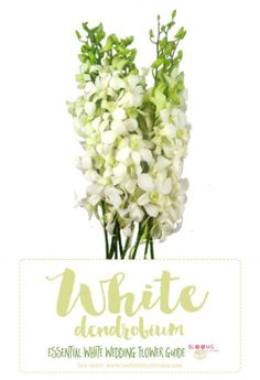3845 best white flowers images on pinterest in 2018 white flowers essential white wedding flower guide names types pics mightylinksfo