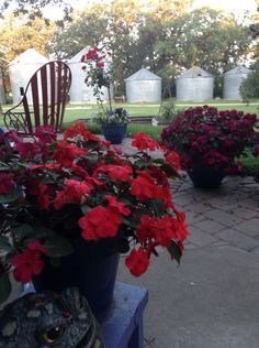 Patio views on the farm from 2014 season  - my seedling plants are still in my little green house waiting for warmer weather in northern Minnesota - the farm yard is very shady so I always grow a lot of impatience in my spring greenhouse - the 2015 plants are still snugly warm in the farm greenhouse !