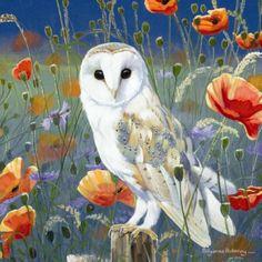 Barn Owl Blank Greeting Card Watching & Waiting by Pollyanna Pickering Owl Art, Bird Art, Illustrations, Illustration Art, Wildlife Art, Orange Flowers, Pet Birds, Art Images, Decoupage
