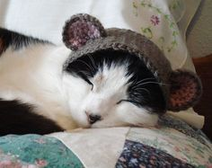 love hats for cats.