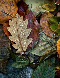 "seasonalwonderment: ""chasingrainbowsforever: "" ~ It's a Colorful Life ~ "" Autumn Leaves """