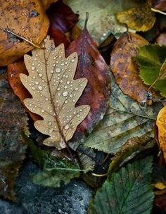 "seasonalwonderment: ""chasingrainbowsforever: "" ~ It's a Colorful Life ~ "" Autumn Leaves """