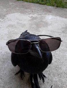 """avas-poltergeist: """" Crow and Raven Arrow. """""""