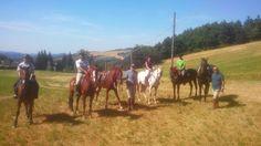 Horses, Animals, Portion Plate, Animales, Animaux, Animal, Animais, Horse