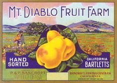 Rare old pear box label, California Boy picks poppies, Mt. Diablo  www.antiquelabelcompany.com