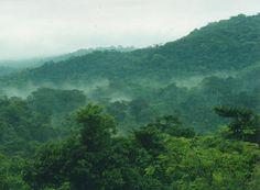 Bwindi Impenetrable National Park, Districts of Kabale, Kisoro and Rukungiri, Uganda. Inscription in 1994. Criteria: (vii)(x)