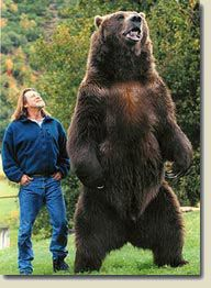 Bart the Bear: Star of the film 'Into the Grizzly Maze'