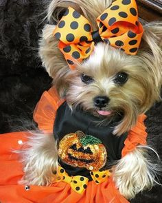 BOO& Yorkie Shout Outs Source by yorkieshoutouts The post Yorkie Shout Outs appeared first on Coulson Puppies. Cute Little Puppies, Cute Dogs And Puppies, Baby Puppies, Baby Dogs, Corgi Puppies, Cute Funny Animals, Cute Baby Animals, Perros Yorkshire Terrier, Yorshire Terrier