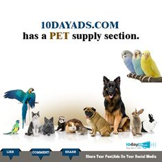10dayads.com has a pet supply section. #FreeAdvertisingOnline #ClassifiedWebsites