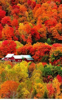 Beautiful fall scenery