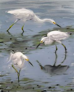 """Egrets at Low Tide"" -  Rob  Rey"