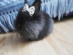 Fluffy Bunny with Bow Happy Animals, Animals And Pets, Cute Animals, Cute Baby Bunnies, Funny Bunnies, Tiny Bunny, Snow Bunnies, Fluffy Bunny, Baby Animals Pictures