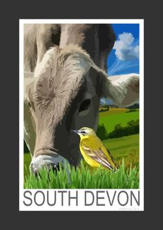 Yellow Wagtail in a South Devon field (Art Print)