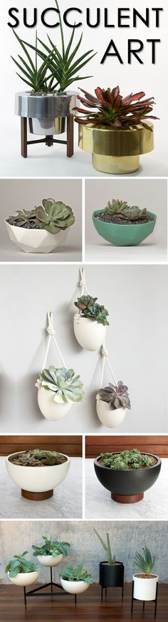 Whether you're redesigning your living room or an outdoor patio space, succulent plants are the perfect home accessory!