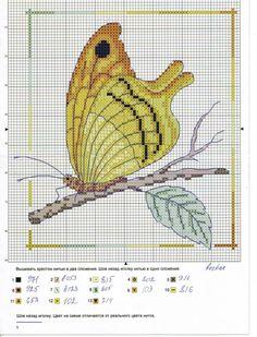 Gallery.ru / Foto # 7 - Mariposas de la Federación Rusa - mamnew