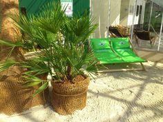 Strandfeeling beim Shoppen? Bei Praskac - das Pflanzenland ist alles möglich! Strand, Straw Bag, Plants, Nice Asses