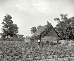 "Summertime: Circa 1900. Grosse Ile, Michigan: ""Cabin at Rio Vista."" 8x10 inch dry plate glass negative, Detroit Publishing Company. Click to view full size."