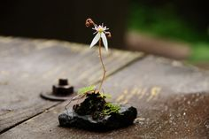 Miniature bonsai... or a poem for you. If you need it. #goodnight