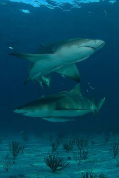 I want to go diving with sharks again so bad!!